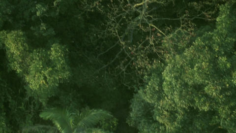 Aerial footage over tropical jungle trees 1 Footage