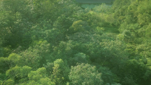 Aerial over tropical jungle- 3 Footage
