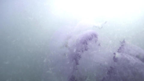 Jellyfish floating under the water in the sun Footage