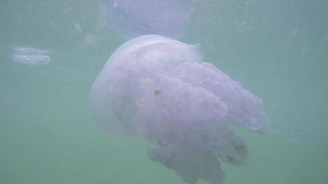 A large jellyfish swims in the clear sea Footage
