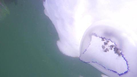 Beautiful jellyfish in the ocean Footage