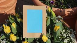 Flower photo frame11 Footage