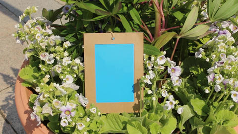 Flower photo frame2 Footage