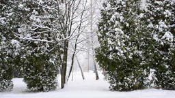 Snowing on green trees with people Footage
