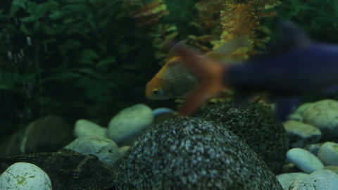 Exotic fishes in an Aquarium Stock Video Footage