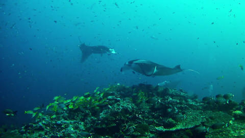 Diving In Maldives 0