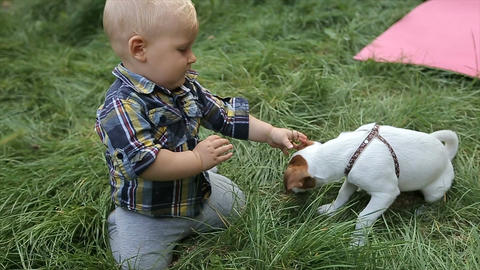 Little boy plays with a dog in the backyard Footage