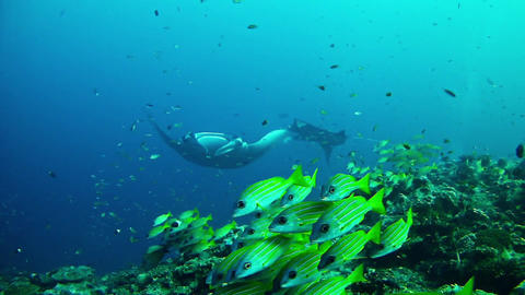 Diving In Maldives 1