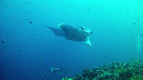Diving In Maldives 2
