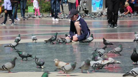 Cute Little Boy Feeding Pigeons Filmmaterial