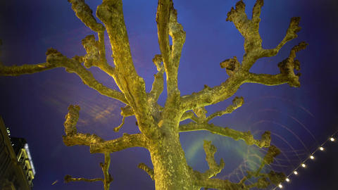 Sycamore plane tree against evening sky, illumination, festive mood, holidays Footage