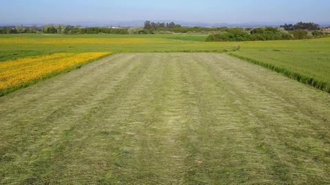 Green grass field Footage