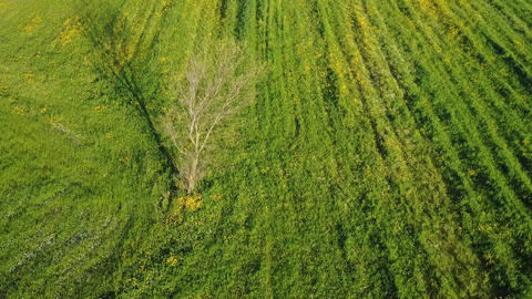 Tree as point of interest on green grass field Footage