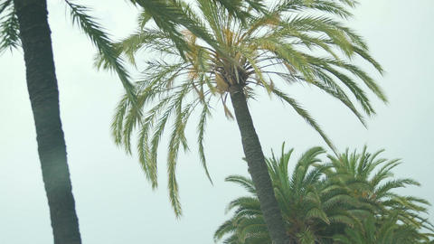 Summer vacation in resort city, view on beautiful palms from moving automobile Footage