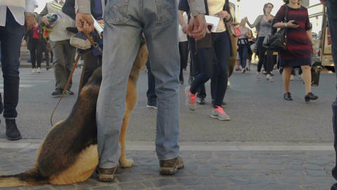 Man and dog without muzzle walking in crowd of people in city, risk of dog bites Footage