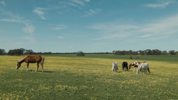 Horse Walking Past In A Field stock footage