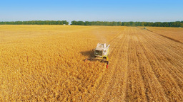 Harvesters Work on Cornfield Footage