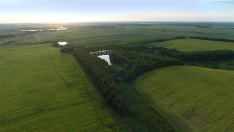 Flying Over Big Green Fields In Evening stock footage