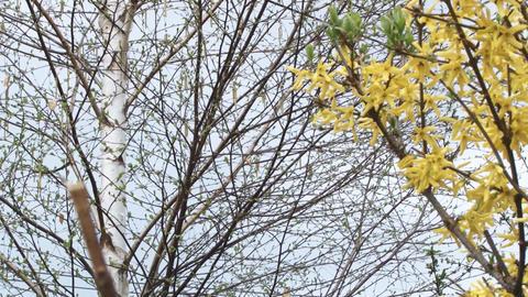 Passenger plane on landing seen through a tree limb Footage