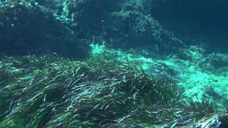 Underwater 0