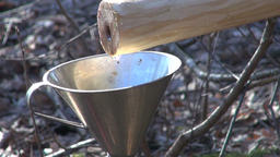 fresh healthy spring birch sap drops in funnel Filmmaterial