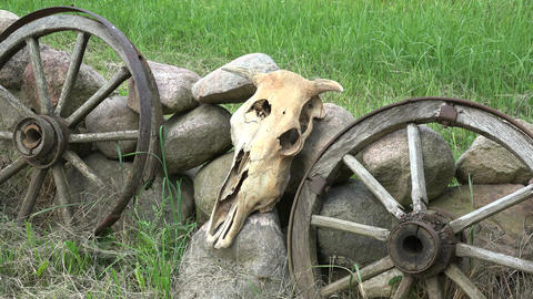Cow skull, old horse carriage wheels and stones in farm, 4K Footage