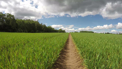 field with green wheat sprouts and spring clouds motion, time lapse 4K Footage