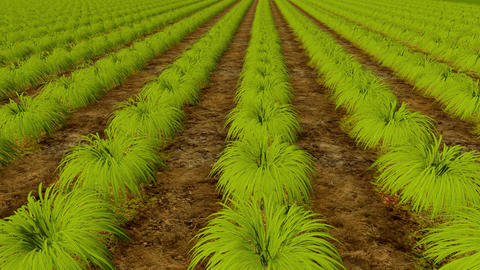 Rows of plants and wooden board Organic Farm Animation