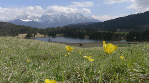 Mountain field with yellow flowers swaying in the wind and the lake Footage