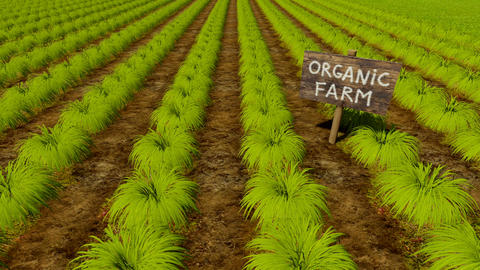 Wooden sign Organic Farm among green beds Animation