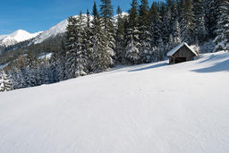 Hay barn on a snowy alpine pasture in front of a forest and mountains フォト