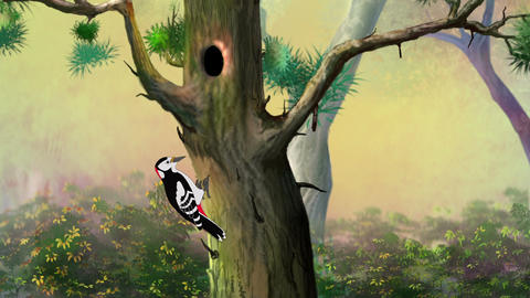 Woodpecker on a pine tree Animation