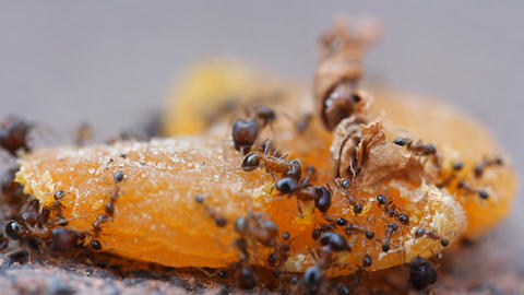 small Ants walking ant insect working building tropical... Stock Video Footage