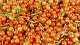 Fresh Cherries stock footage