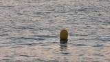 Yellow Buoy bobs on the waves, closeup Footage