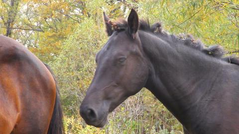 wild horse Stock Video Footage