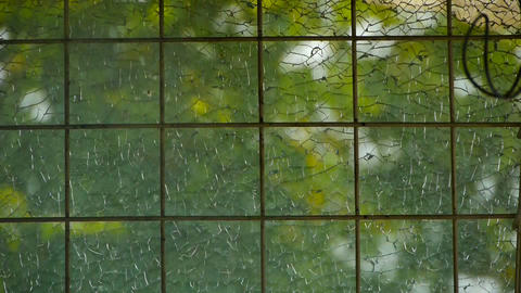 leaves swaying in the windows,diamonds,squares,rectangles,matrix Footage