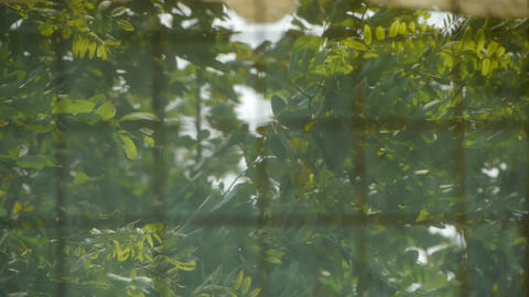 leaves swaying in the... Stock Video Footage
