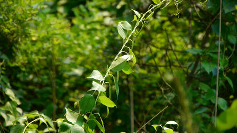 bushes in the wind,Dense swing tree,Hillside weeds &... Stock Video Footage