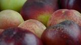 Fresh delicious peaches & nectarines Footage