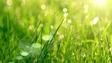 Dew Drops In Lights On Green Grass. stock footage