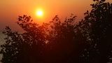 Sunset Tree stock footage