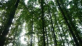 Panoramic of trees crown,forest,jungle,shade shadow Footage