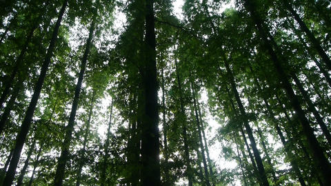 Panoramic of trees crown,forest,jungle,shade shadow Stock Video Footage