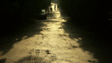 Visitors walk under the shade of trees,walking on road Stock Video Footage