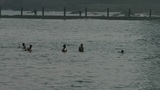 People swimming in the ocean,relying on dams Footage