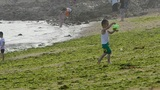 Child little boy play at beach.seaweed,seaweed,enteromorpha,tide,tidal Footage
