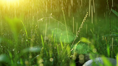 dew drops in lights on green grass Stock Video Footage