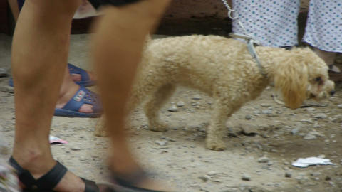 Puppy dog on side of road,China's urban bazaar town Stock Video Footage