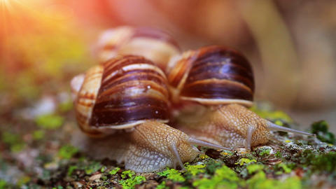 snail closeup in the rays of sun Stock Video Footage